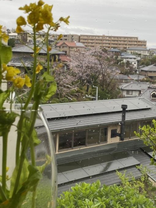 家の中で花見_a0125981_18373997.jpg