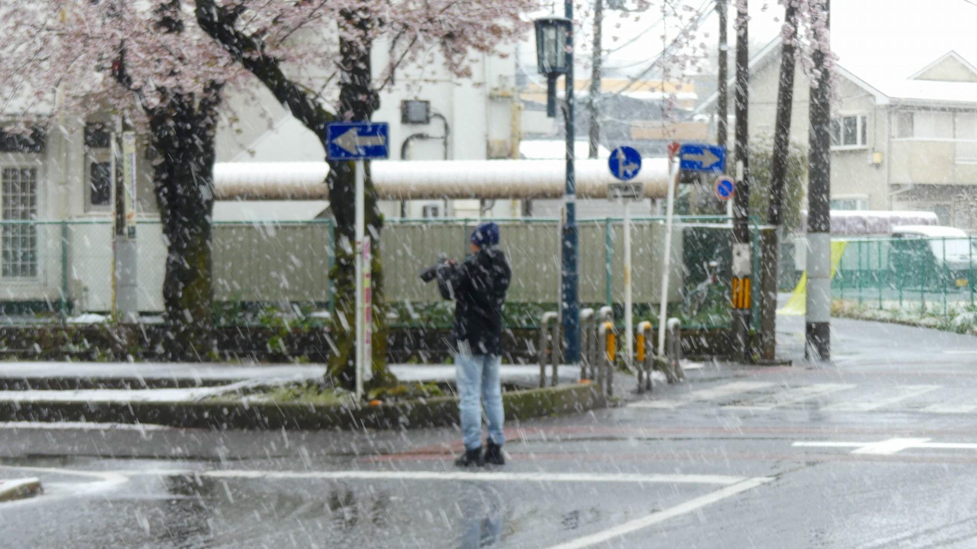 咲いた桜に雪がふる 【 2020 3/29(日)  】_a0185081_11350049.jpg