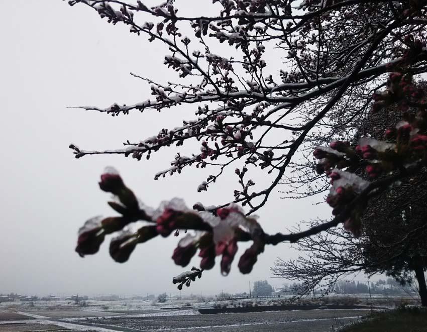 ミゾレ降る 3月末の 日曜の朝_b0126182_17293936.jpg