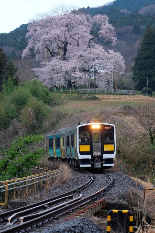 矢祭町「戸津辺の桜」&水郡線 <2> 2020・03・28_e0143883_04475478.jpg