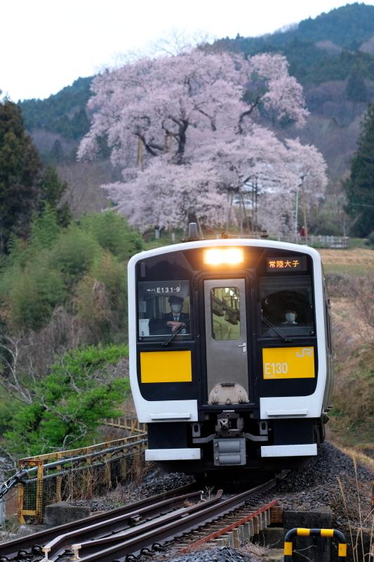 矢祭町「戸津辺の桜」&水郡線 <2> 2020・03・28_e0143883_04484678.jpg
