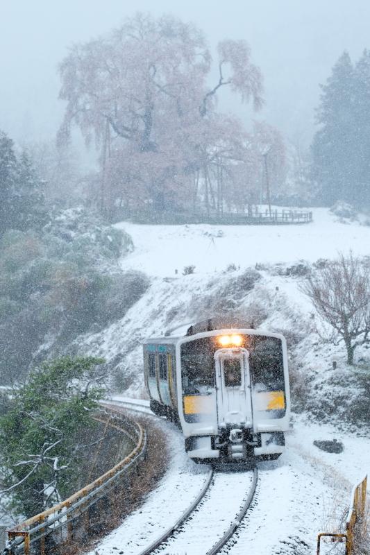 雪化粧!! 矢祭町「戸津辺の桜」&水郡線 <1> 2020・03・29_e0143883_14570799.jpg