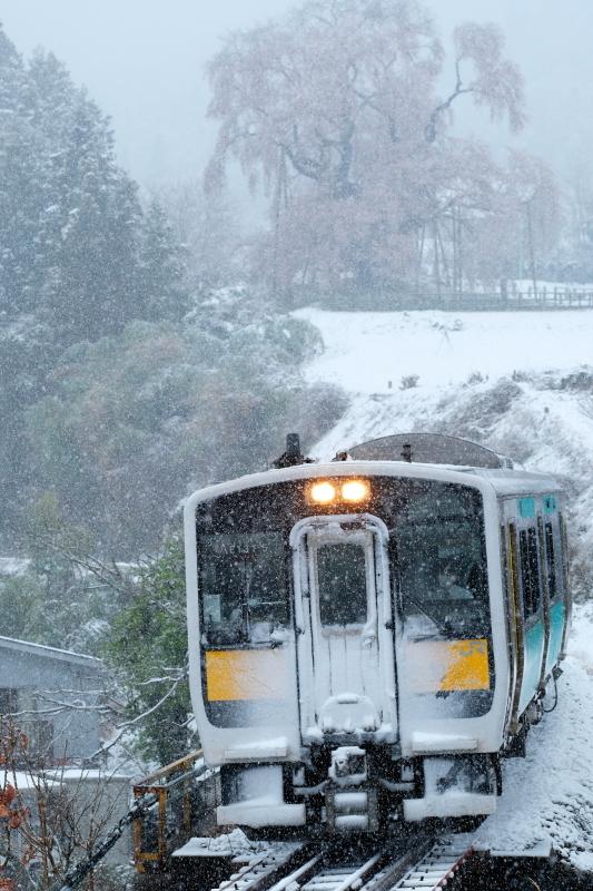 雪化粧!! 矢祭町「戸津辺の桜」&水郡線 <1> 2020・03・29_e0143883_14575310.jpg