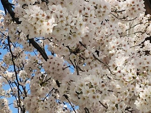 桜🌸続き_f0347891_22403867.jpeg