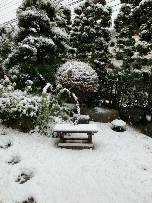 昨日は桜満開、今日は大雪警報☆_a0063997_10082867.jpg