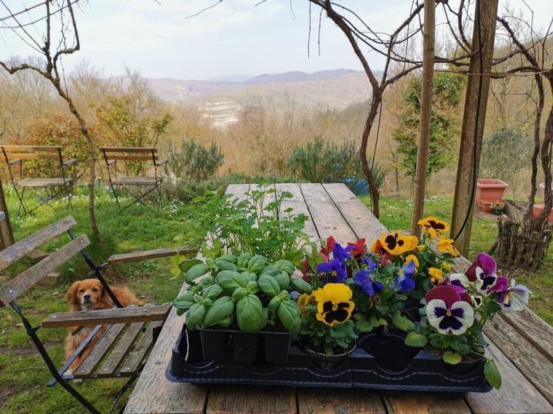 花を植えて種をまいて_f0106597_01302028.jpg