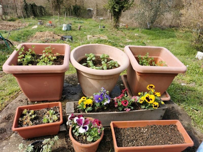 花を植えて種をまいて_f0106597_01323741.jpg
