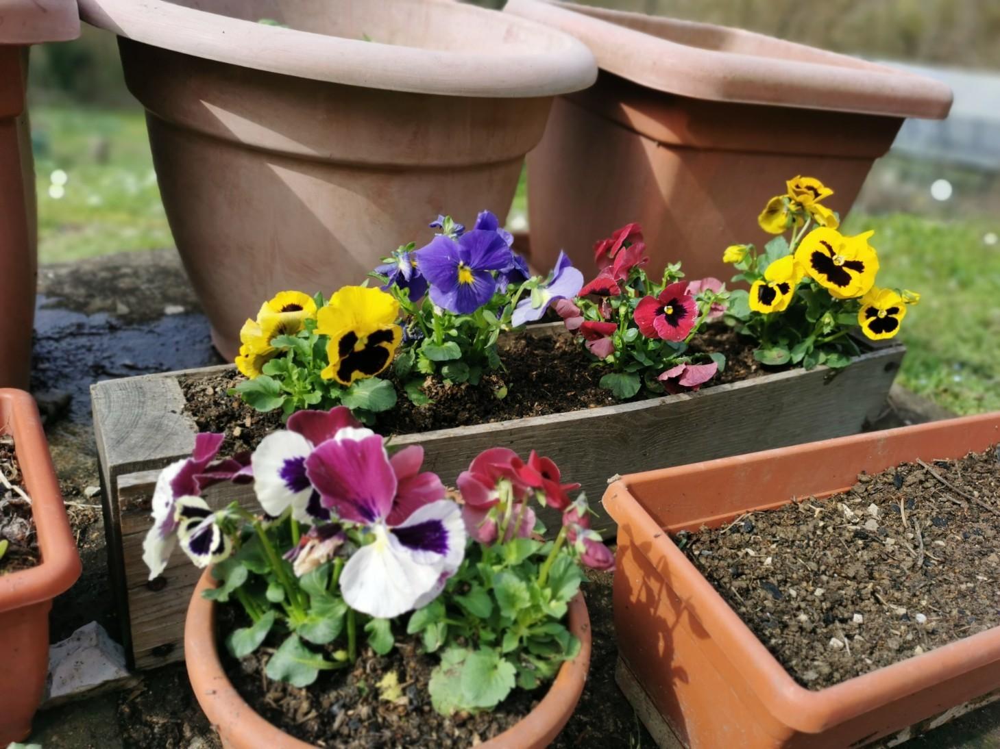 花を植えて種をまいて_f0106597_01333981.jpg