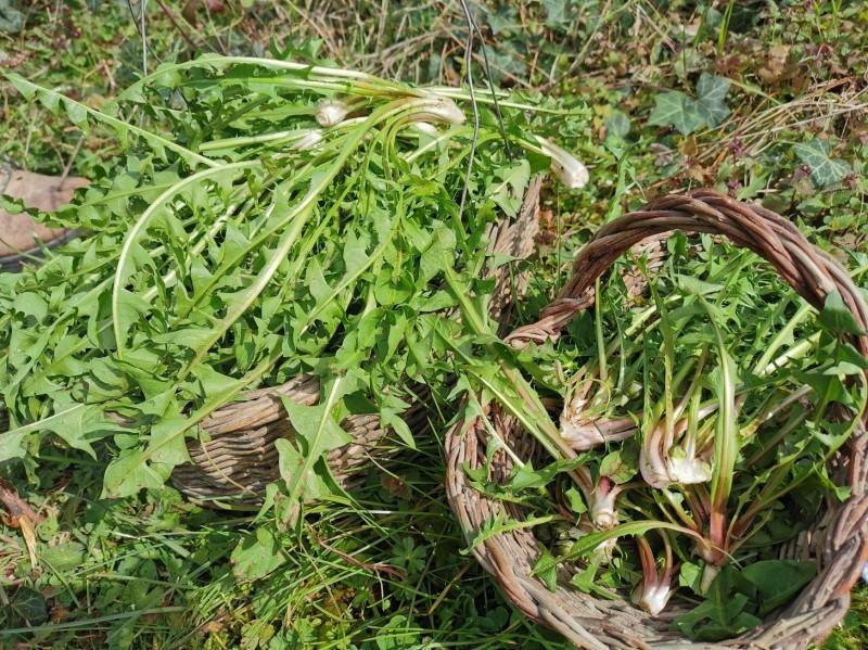 花を植えて種をまいて_f0106597_01343966.jpg