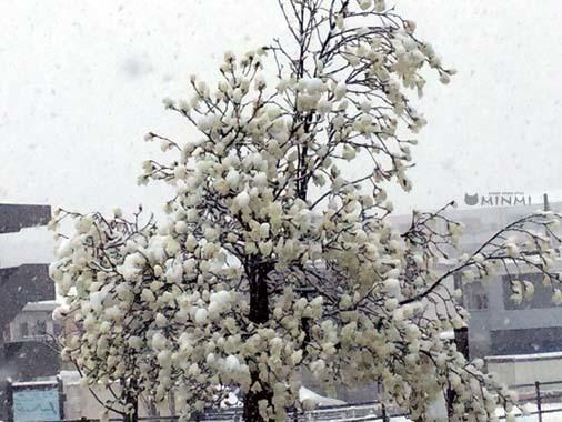 季節外れの雪ですね~(#^^#;)_c0140599_13050786.jpg