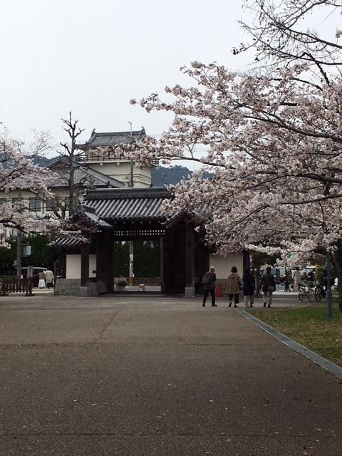 桜祭り_e0150006_14533901.jpg