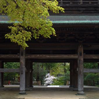 円覚寺の桜_c0195909_14133994.jpg