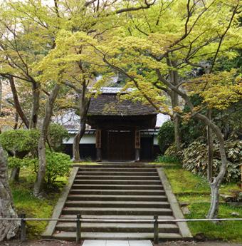 円覚寺の桜_c0195909_14140086.jpg