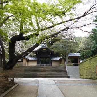 円覚寺の桜_c0195909_14140621.jpg