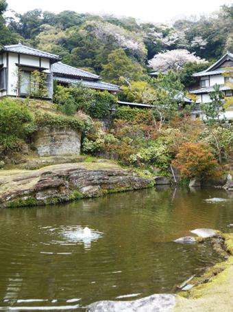 円覚寺の桜_c0195909_14141561.jpg