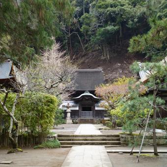 円覚寺の桜_c0195909_14142025.jpg