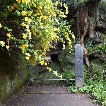 円覚寺の桜_c0195909_14145280.jpg