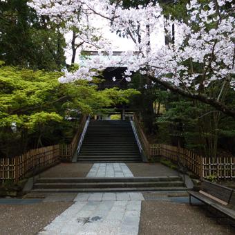 円覚寺の桜_c0195909_14150450.jpg