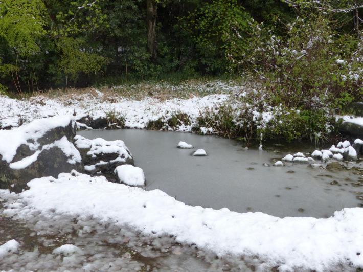桜と雪の岩槻城址公園_f0296312_00332137.jpg