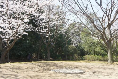 【お花見*公園】_f0215714_16255988.jpg