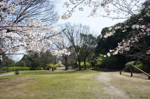 【お花見*公園】_f0215714_16262813.jpg