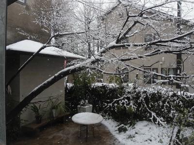 """""""桜隠し""""を思い、エゴの積雪を楽しむ_e0010418_11390331.jpg"""