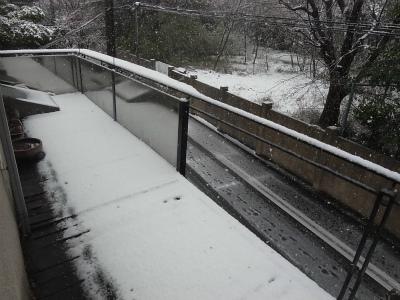 """""""桜隠し""""を思い、エゴの積雪を楽しむ_e0010418_11390944.jpg"""