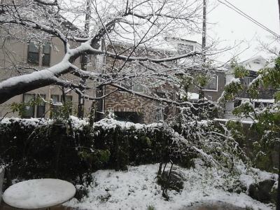 """""""桜隠し""""を思い、エゴの積雪を楽しむ_e0010418_11391831.jpg"""