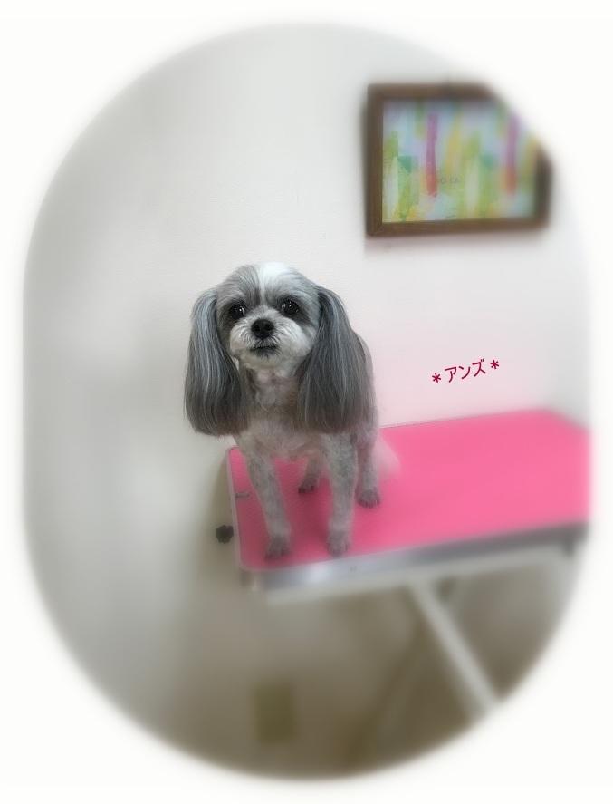 アンズちゃん_a0315823_19545136.jpg