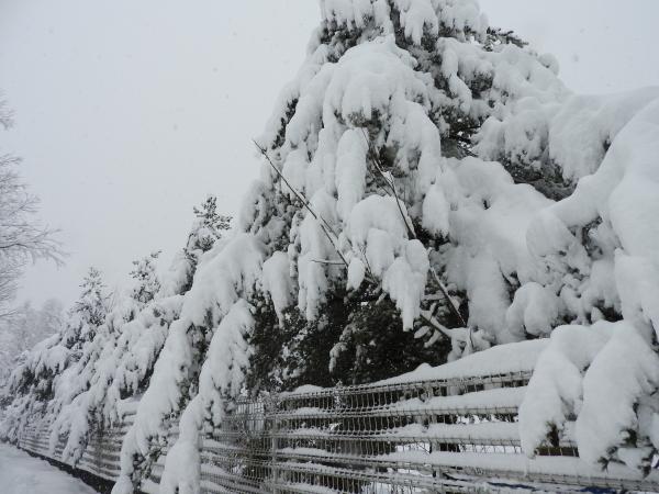 追記あり:今シーズン1の降雪!交通情報要確認!!(2020年3月29日)_b0174425_20525425.jpg