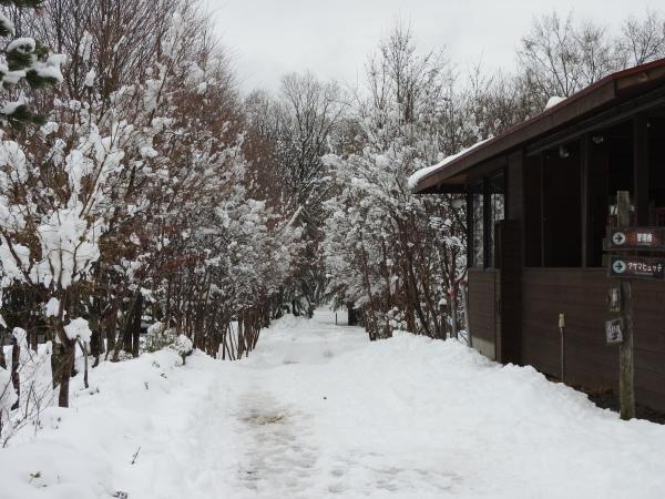 追記あり:今シーズン1の降雪!交通情報要確認!!(2020年3月29日)_b0174425_20543658.jpg