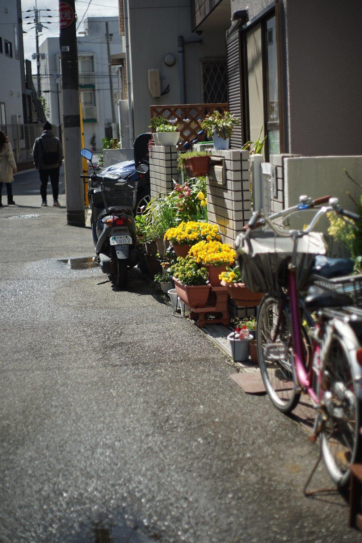 ペトリ CC Auto 55mmF1.8 で 旭ヶ丘を散歩_b0069128_20560897.jpg