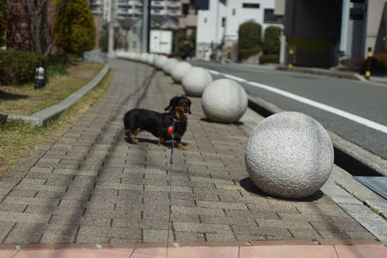 ペトリ CC Auto 55mmF1.8 で 旭ヶ丘を散歩_b0069128_20572827.jpg