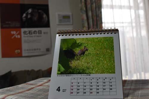 20年度卓上フォトカレンダー(2)…4月_c0062934_20032735.jpg
