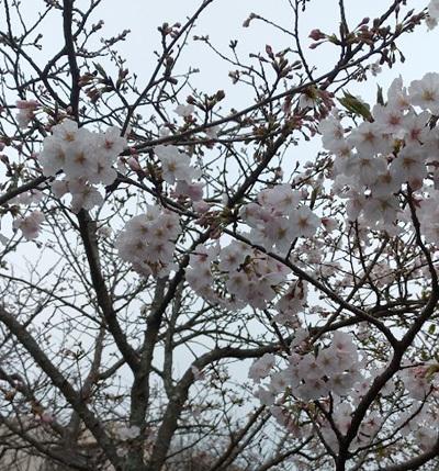 日本から届いた悲しい知らせにGACKT、YOSHIKI_c0036138_17160348.jpg