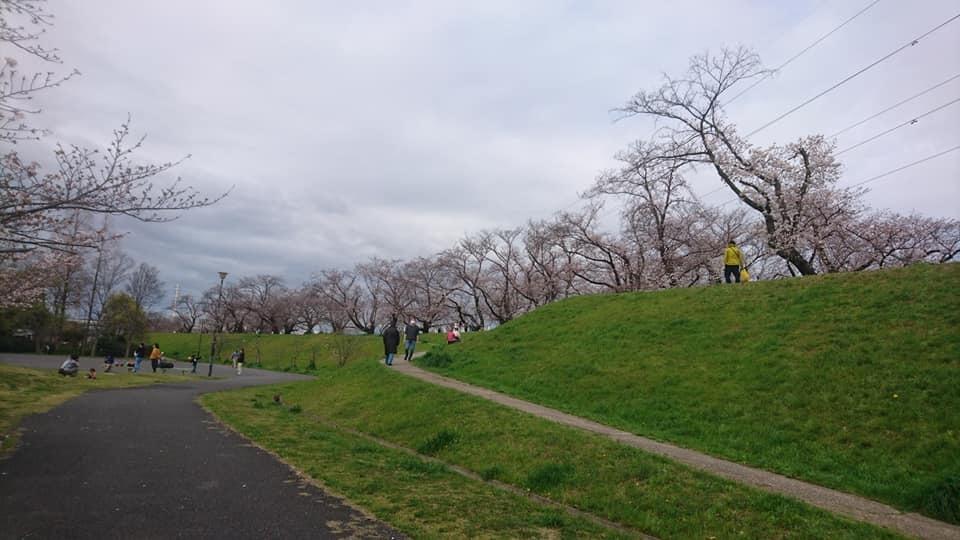 桜並木_f0373339_15354896.jpg