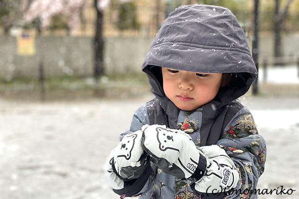 1日だけの大雪で、桜と雪のコラボレーション_c0024345_12320710.jpg