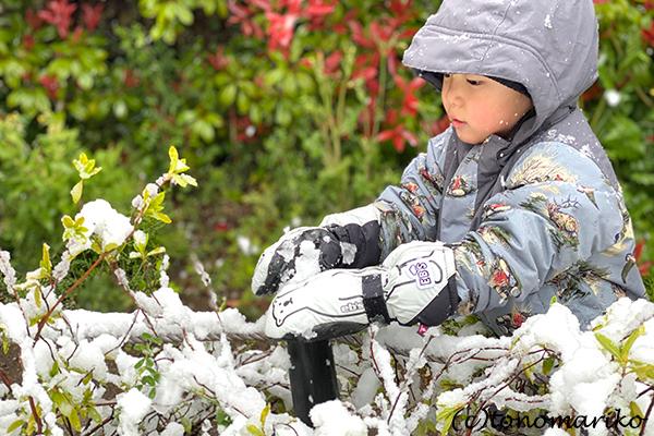 1日だけの大雪で、桜と雪のコラボレーション_c0024345_12320749.jpg