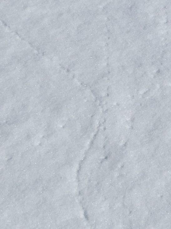 スノーシュー(かんじき)でお散歩_b0135948_15384336.jpg