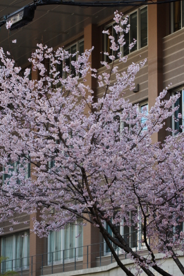 京都市中京区_b0186148_11192984.jpg