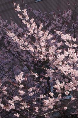 京都市中京区_b0186148_11194986.jpg