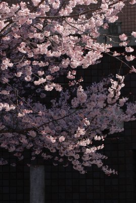 京都市中京区_b0186148_11200874.jpg