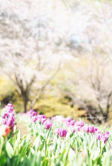 4月_e0268051_20433058.jpg