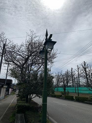 国道沿いの桜_c0327752_14425604.jpg