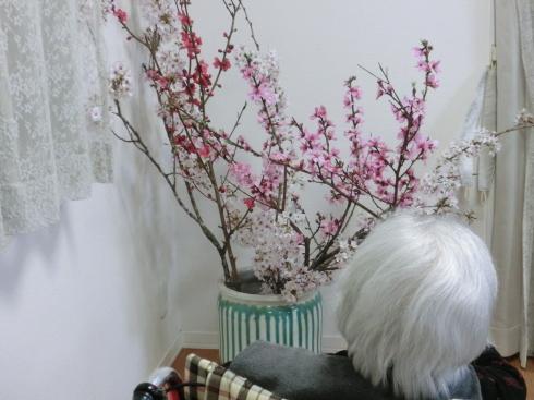 お花見!_d0178056_20133689.jpg