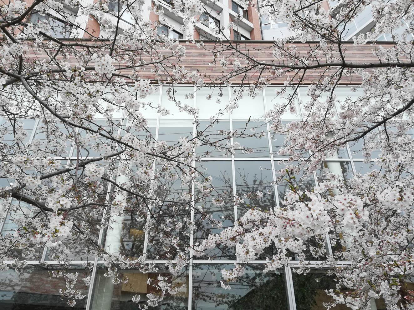 花冷え_c0299360_147918.jpg