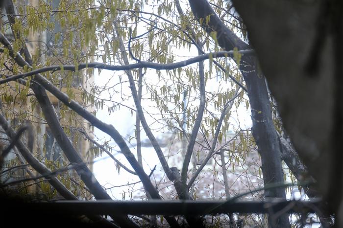 春の雪を朝から観察しました_a0031363_22494123.jpg