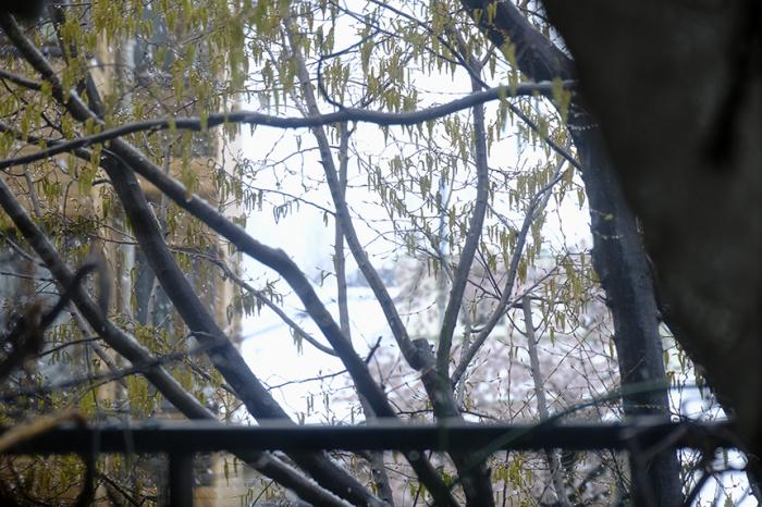 春の雪を朝から観察しました_a0031363_22494992.jpg