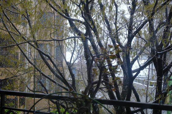 春の雪を朝から観察しました_a0031363_22495568.jpg