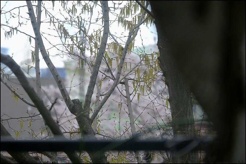 遠くの桜は今日もまだ散り終わらずに残っているようです_a0031363_22542645.jpg